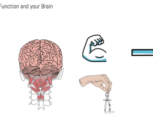 Spinal Function and your Brain
